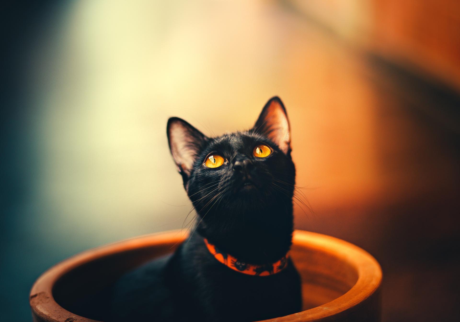 Σχολιάστε ελεύθερα σε όλες τις ειδήσεις του μαύρου γάτου!