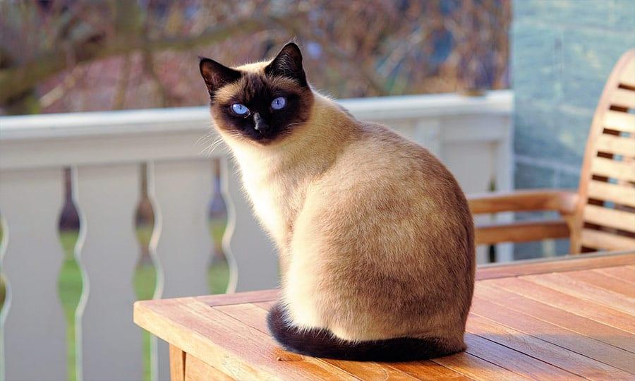 Εχεις κάποιο ζήτημα που θέλεις να ερευνήσει ο μαύρος γάτος; Νιαούρισέ το ….